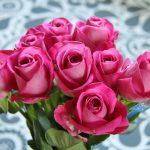 Fina rosor från Saga med familj