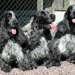 Lottie, Saga & Nilla