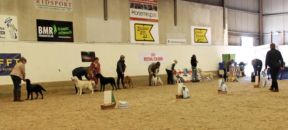 Många fina hundar som konkurrenter.